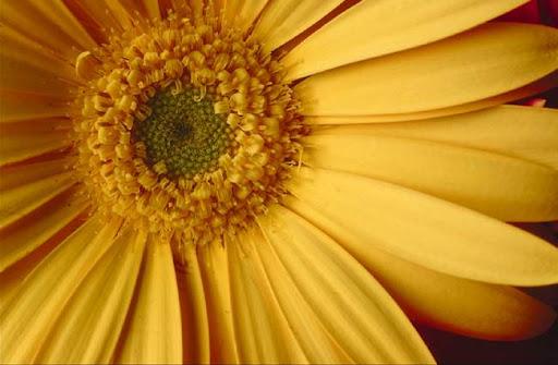 http://lh6.google.com/LisaSmirnoff/Rto-TLKXq7I/AAAAAAAACUw/Kc-eVUX9_q4/Flower.jpg?imgmax=512