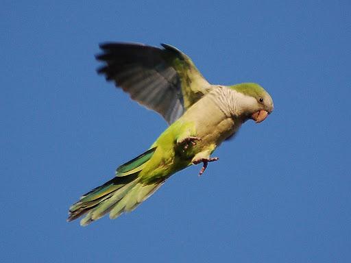 http://lh3.google.com/LisaSmirnoff/RtpJfbKXsOI/AAAAAAAACfI/wvmjnG-zULU/wild-parrot-safari2-722903.jpg?imgmax=512