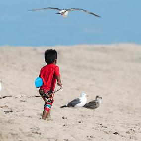 Chasing birds by Tommy  Lam - Uncategorized All Uncategorized