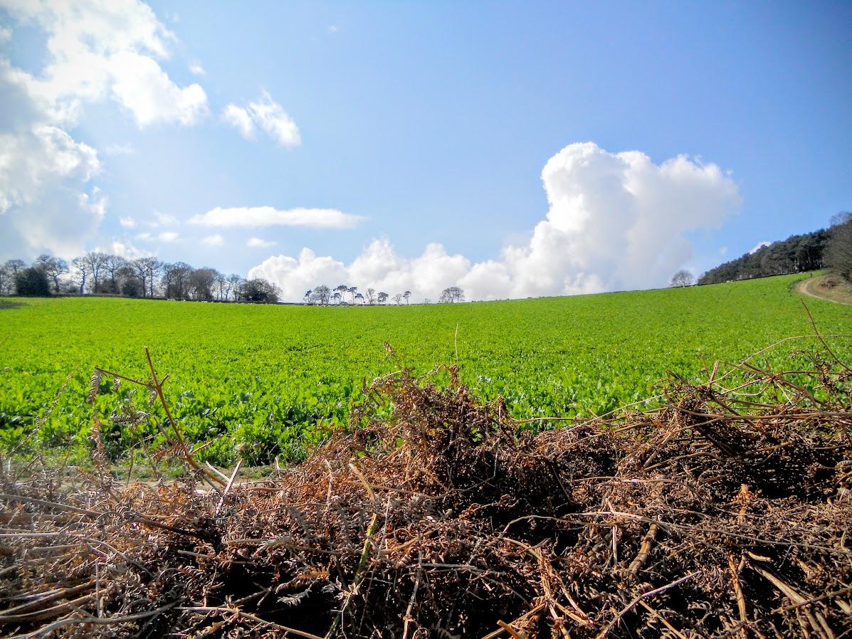 Luscious green field on Broombriggs Farm