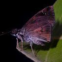 Zera butterfly
