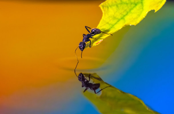 anche le formiche......escono in primavera