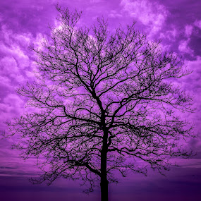 Purple sky at st. Mary's  by Andrew Medvegy - Landscapes Prairies, Meadows & Fields ( tree sky purple )