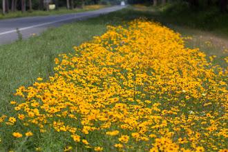 Photo: wildflowers coming into White Springs