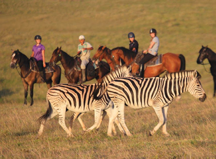 Visitors can enjoy a horseback safari at Botlierskop Private Game Reserve