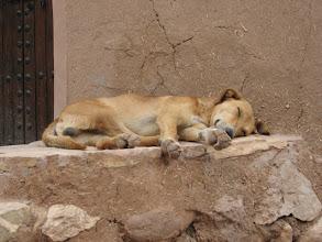 Photo: Dog at Ait Ben Haddou