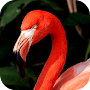 Flamingo Wallpaper APK icon