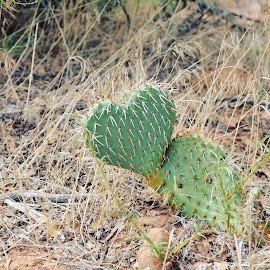 Love Hurts by Lorie Tannourji - Nature Up Close Other plants ( plant, heart, nature, zion, cactus,  )