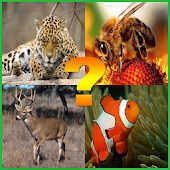 Guess The Animal For Kids