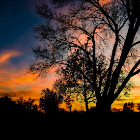 Sunset in the park by Dan Miller - Novices Only Landscapes ( blue sky, park, silhouette, sunset, trees, golden hour,  )
