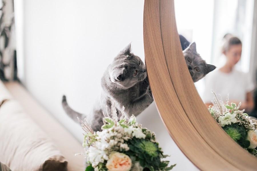 Wedding photographer Katerina Zhilcova (zhiltsova). Photo of 22.09.2014