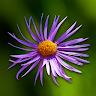 com.antiopa.fleurenpoche