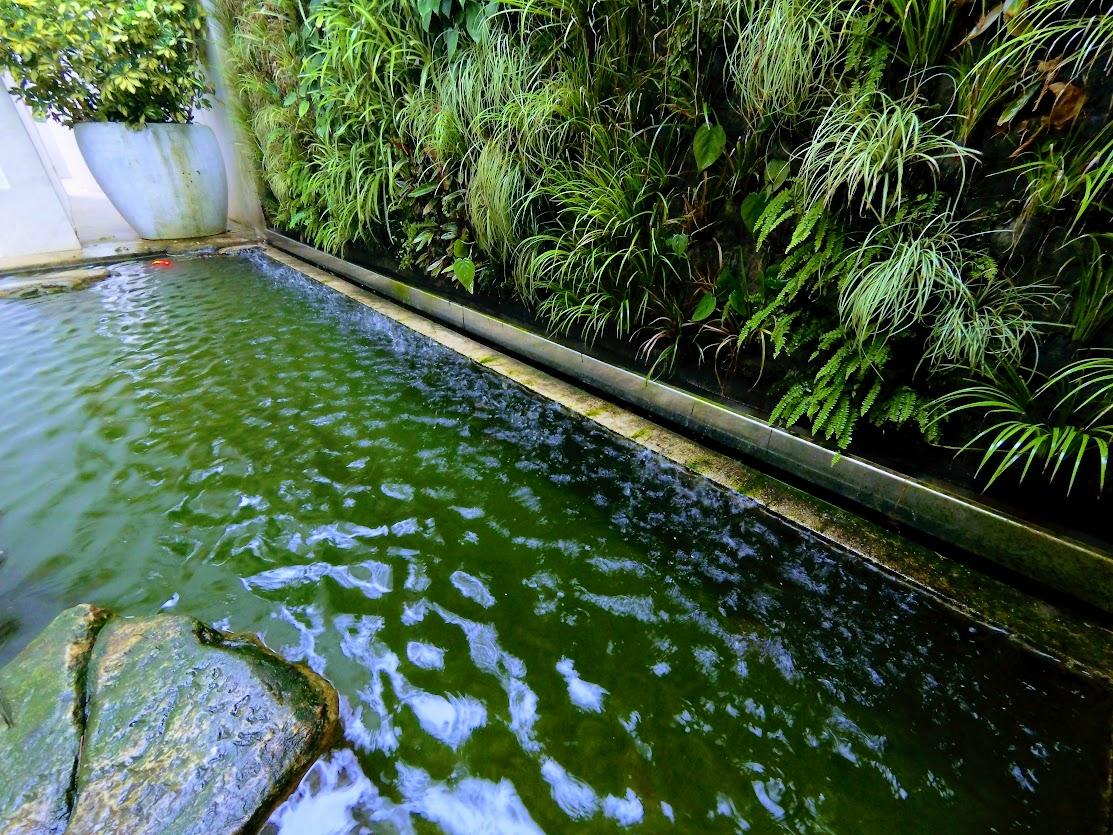 Algas y piscinas naturales