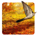 Autumn Live Wallpaper 🦉🍁 icon