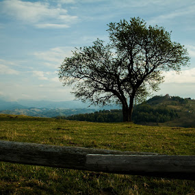 Alone by Iulia Georgescu - Nature Up Close Trees & Bushes ( fence, village, wood, tree, autumn, grass, green, fall, traditional, rural )