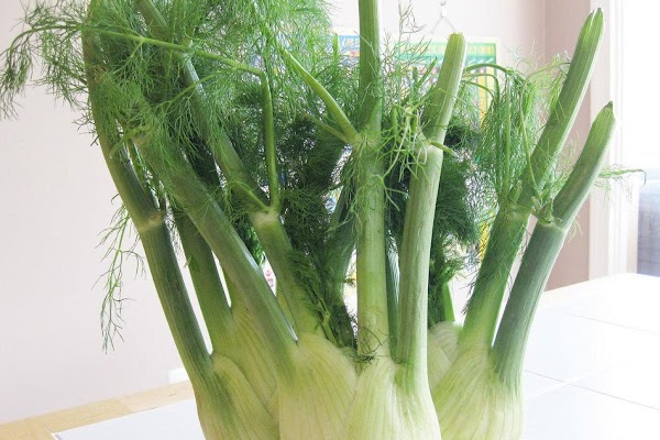 FennelFennel is a plant whose leaves look very much like dill thin, waving filaments...