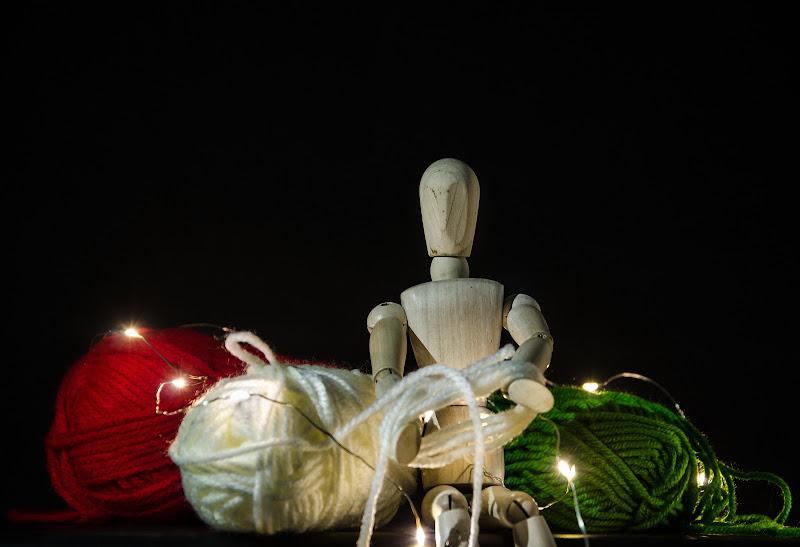 The tricolor tailor di Primula Vico