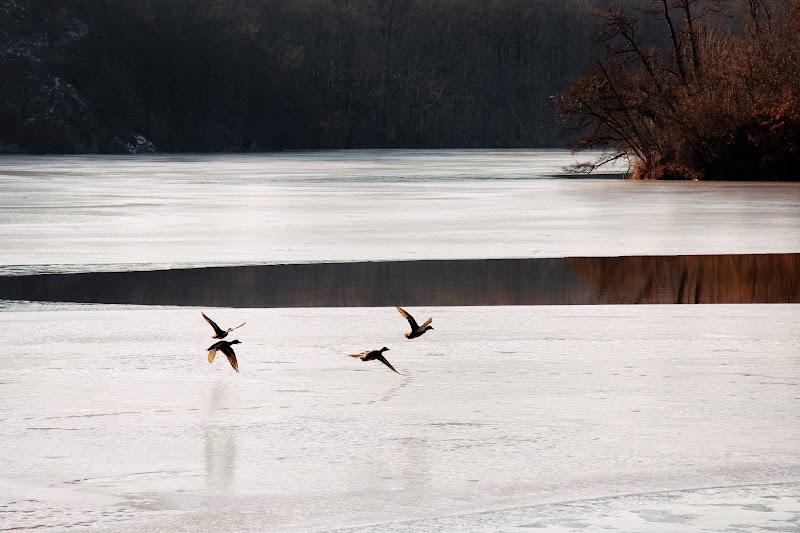 Flying on ice di Barbara Surimi