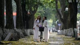 Thủ đô Hà Nội vốn nổi tiếng vì nét đẹp cổ kính với những ngõ phố rợp cây xanh bóng mát, trong số này có nhiều loại cây được xem là 'di sản' lâu đời.
