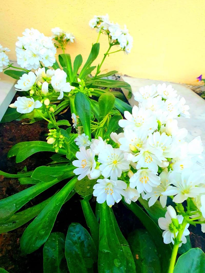 nuova vita a primavera di anna_bruno