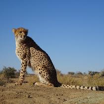 Biodiversity of Namibia