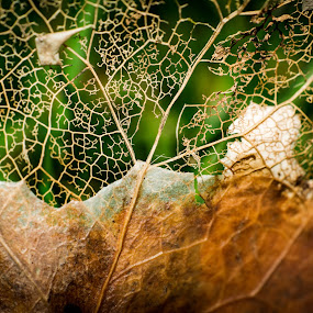 Eat me  by Ron n'Roll - Nature Up Close Leaves & Grasses ( fall, autumn, rotting, leaf,  )