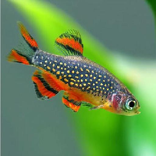 Tropisch Aquarium Vissen