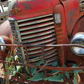 International by Jessica Simmons - Artistic Objects Antiques ( farm, vines, vintage, oklahoma, truck,  )