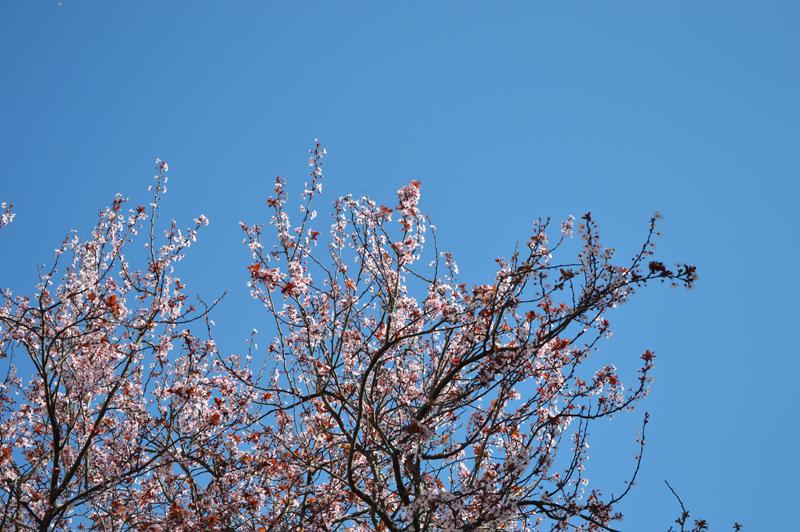 è primaverarami in fiore di rita18