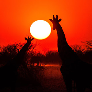 Africa-9533.jpg