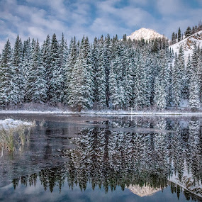 Silver Lake  by Brandon Montrone - Landscapes Forests ( outdoor, mirror, mountain, reflection, nature, snow, winter, pine trees, scenic, lake, landscape )