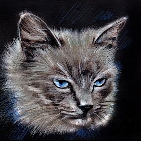 My Cat by Daliana Pacuraru - Drawing All Drawing ( pastel, cat, daliana pacuraru, blue, drawing, portrait, eyes )
