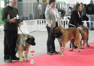 Photo: Le petit cornet distribué à tous les concurents est rempli de friandies pour chien (bonne idée)