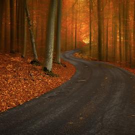 Road  by Manu Heiskanen - Uncategorized All Uncategorized ( curvy, red, tree, autumn, trees, yellow, leaf, road, landscape, leaves, paulinawolekpardon )