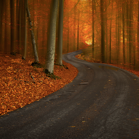 Road  by Manu Heiskanen - Uncategorized All Uncategorized ( curvy, red, tree, autumn, trees, yellow, leaf, road, landscape, leaves, paulinawolekpardon )