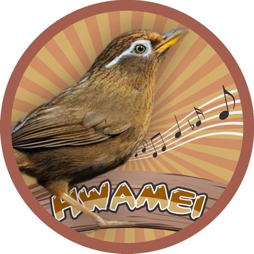 音樂App|画眉 LOGO-3C達人阿輝的APP