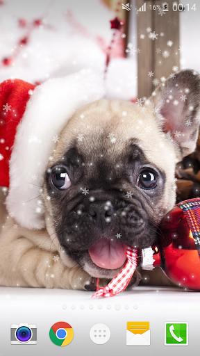 クリスマス犬ライブ壁紙