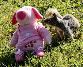 Photo: (Year 2) Day 359 - Pippa and New Friend