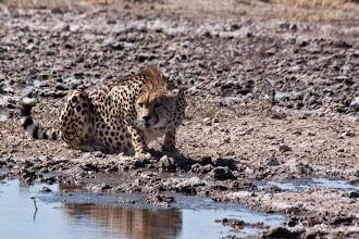 Photo: Central kalahari NP - Do I see something yummy? / Central Kalahari NP - Vidím něco na zub?
