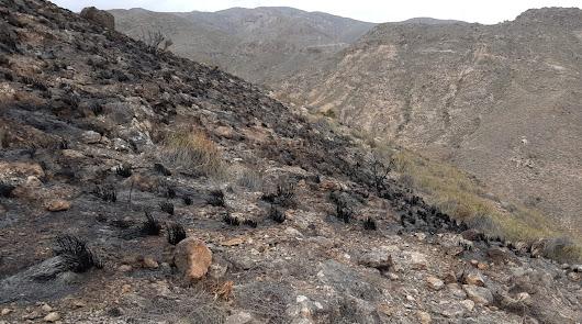 Controlado de madrugada un incendio forestal declarado en Gádor