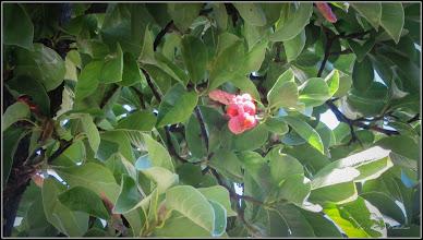 Photo: Turda - Aleea Nicolae Titulescu, magnolie - 2018.10.05