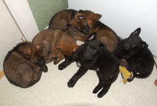 Photo: En trøtt gjeng. 6 uker og 5 dager