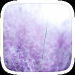 Purple Lavender Theme