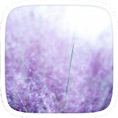 Purple Lavender Theme