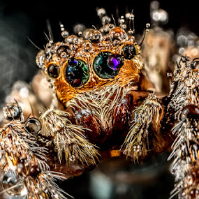 Rainbows in my eyes by Rustam Razali - Animals Insects & Spiders (  )