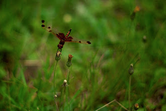 Photo: Dragonfly Damn, I love these creatures.  #365project curated by +Susan Porterand +Simon Kitcher