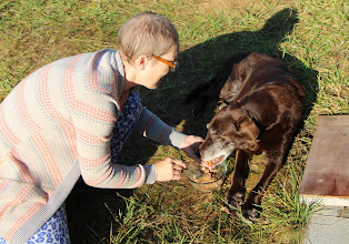 Photo: Old dog Spackle frequently likes to be hand-fed these days.