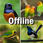Kumpulan Kicau Burung Lengkap 2018