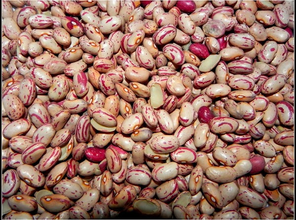 Rinse off your cranberry beans and sort through them. Soak them in water overnight,...