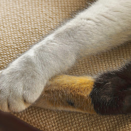 Pushy's Paws by Elna Geringer - Uncategorized All Uncategorized